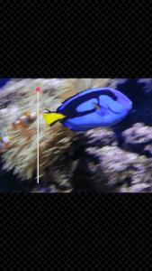 GIF Studio - increase playing speed