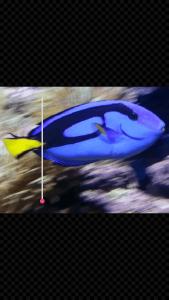 GIF Studio - decrease animated GIF playing speed
